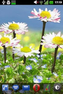 Daisy Flowers Free Wallpaper - screenshot thumbnail