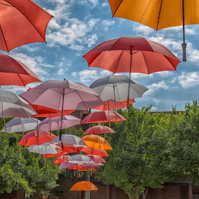 Umbrellas by Samuel Burns - City,  Street & Park  Street Scenes (  )