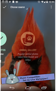 Animal Gallery - Muzei Screenshot 9