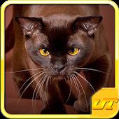 Kitty Cat Breeds Quiz HD