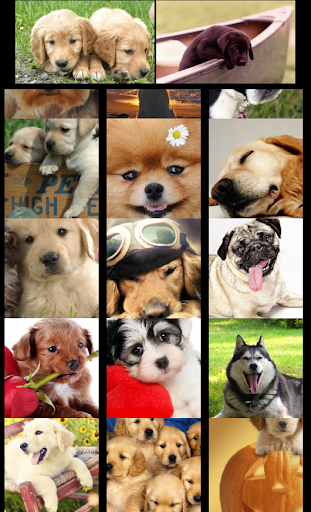 The Dog Wallpaper