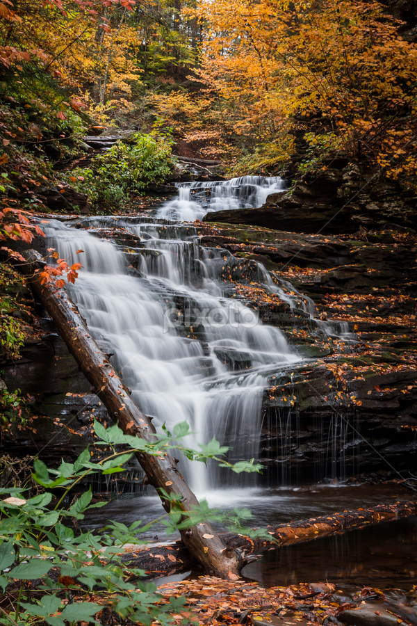 Mohican Falls by Michael Sharp - Landscapes Waterscapes ( luzerne county, pa, waterfall, fall foliage, pennsylvania, mohican falls 39', united states, ricketts glen state park )
