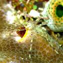 Underwater spider