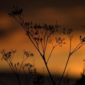 by Karen Buttery - Landscapes Sunsets & Sunrises