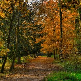 Beautiful path ... by Zeljko Kliska - City,  Street & Park  City Parks ( park, autumn, fall, forest, zagreb,  )
