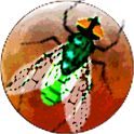 Galactic Insects icon