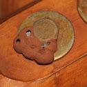 Sphecidae Wasp Nest