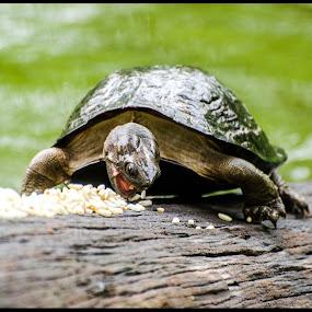 by Pritam Saha - Animals Reptiles ( #showusyourpets, #garyfongpets )