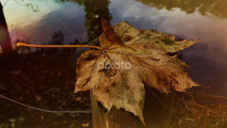 Autumn Leaf by Simon Eastop - Instagram & Mobile Android ( nature, android, autumn, leaf, mobile, fall, color, colorful )