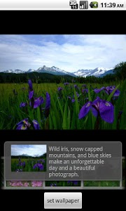 Alaska's Wild Flowers Pro screenshot 1