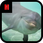 Flappy Dolphin icon