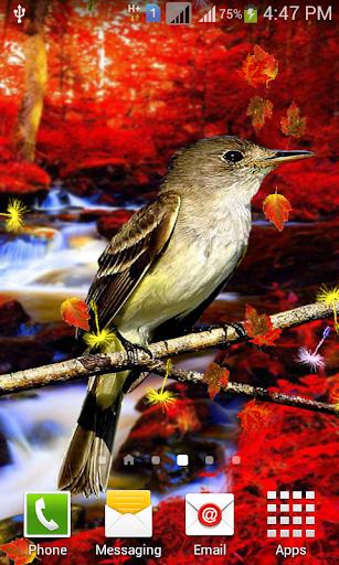 Cute Birds Live Wallpaper