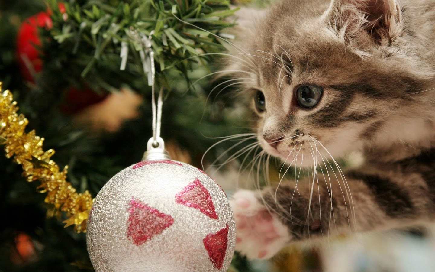 Pet Christmas Wallpaper HD- screenshot