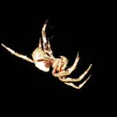 Spider Squasher