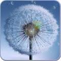 Download Galaxy S4 Dandelion Wallpaper APK for Laptop