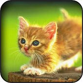 Cute Kitties Wallpapers