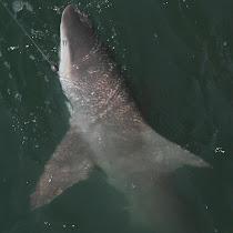 Florida Ocean Life