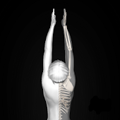 Anatomy for Artists: Yoga Pose