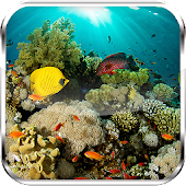 Amazing Underwater Aquarium HD