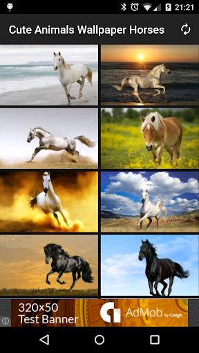 Cute Animals Wallpaper Horses