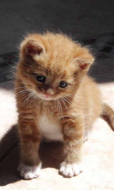 Cute Orange Kitty - screenshot