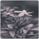 Black and White wallpapers icon