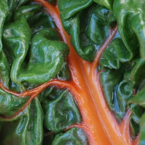 Rainbow Chard by VAM Photography - Nature Up Close Gardens & Produce ( rainbow chard, farmers market, union square, chard, places, nyc,  )