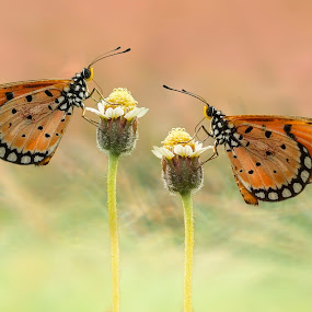 I Want With You by Abdul Aziz - Animals Insects & Spiders ( canon, macro art, butterfly, macro, indonesia, art, focus, insect,  )