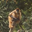 Mono aranna