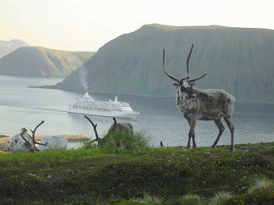 Sail to Norway on board Seven Seas Voyager and discover local wildlife playing reindeer games.