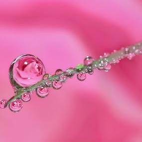 by Yenni Sumita - Nature Up Close Natural Waterdrops