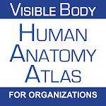 Human Anatomy Atlas (Org.) 5.0.54 Apk