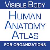 Human Anatomy Atlas (Org.)