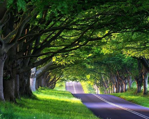 美麗之路壁紙