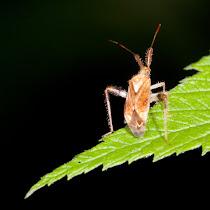 Colorado Bug Club