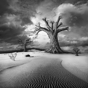 Rezerwat by Dariusz Klimczak - Digital Art Places ( clouds, sand, dunes, photomanipulation, montage, desert, monochrome, waves, mood, kwadrart, tree, shadow, square, surreal, light, klimas )