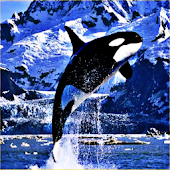 Killer Whale Sound Effects