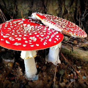 Red by Evah Banova - Instagram & Mobile iPhone ( iphoneography, red, nature, nature up close, iphone, mushrooms, mushroom, natural,  )