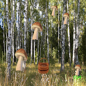 mushrooms and busket