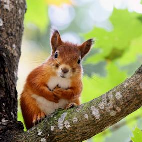 Cute by Teija Kukkonen - Animals Other Mammals
