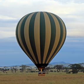 Balloon over Serengeti by Tony Murtagh - Transportation Other ( serengeti., balloons, landscapes, tanzania )
