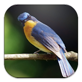 Suara Kicau Burung (Master)