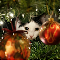 Advent Calendar Christmas Cats icon