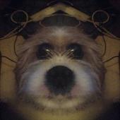 Symmetrical Selfie