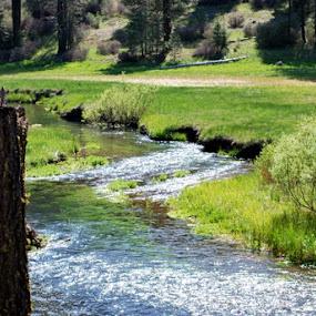 Creek by Nikki Kean - Landscapes Prairies, Meadows & Fields ( water, grass, green, outdoors, creek )