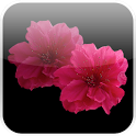 Lovely Red Sakura Live WP icon