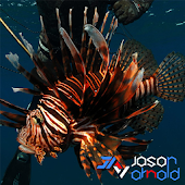 Report Florida Lionfish
