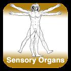Anatomy - Sensory Organs icon