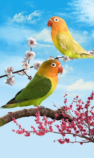 鳥類動態壁紙