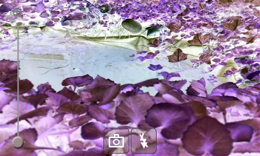 Inverted Camera Effect